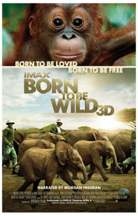 born-to-be-wild-poster.jpg